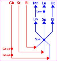 האנטומיה של ששת השכבות / שון גודמן